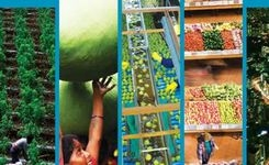 2017 Global Food Policy Report - IFPRI