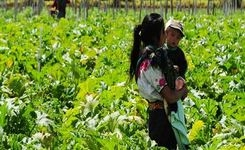 Land Rights for Women Deter Violence & Leverage Equality