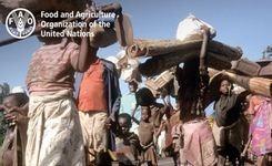 Migration, Agriculture & Rural Development - Gender