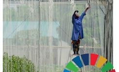 The Sustainable Development Goals Report 2017 - Gender