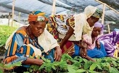 Eliminate Legal Discrimination Against Women to Advance Food Security & Nutrition